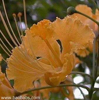 Fleurs tropicales exotiques plantes et graines vente for Plantes par correspondance