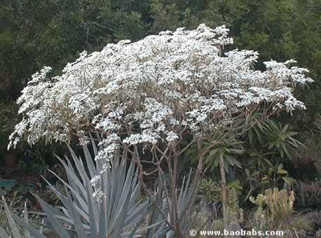 Fleurs tropicales exotiques plantes et graines vente for Catalogue plantes par correspondance