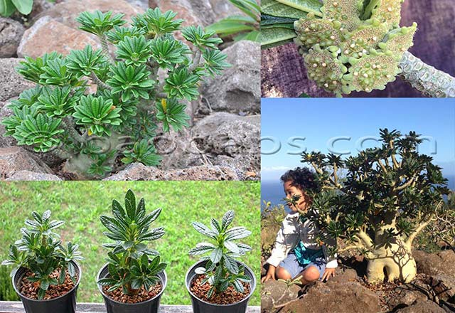 Plantes et graines tropicales exotiques rares for Commande plantes par correspondance