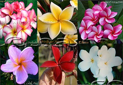 Rare Exotic Tropical Plants and Seeds Shipped Worldwide